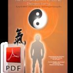 Professionelles Qi Gong - Band 2 als E-Book