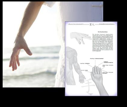 Die Hand- und Fingermeridiane