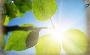 Qi Gong und das Qi - Eine wahre Universal-Medizin